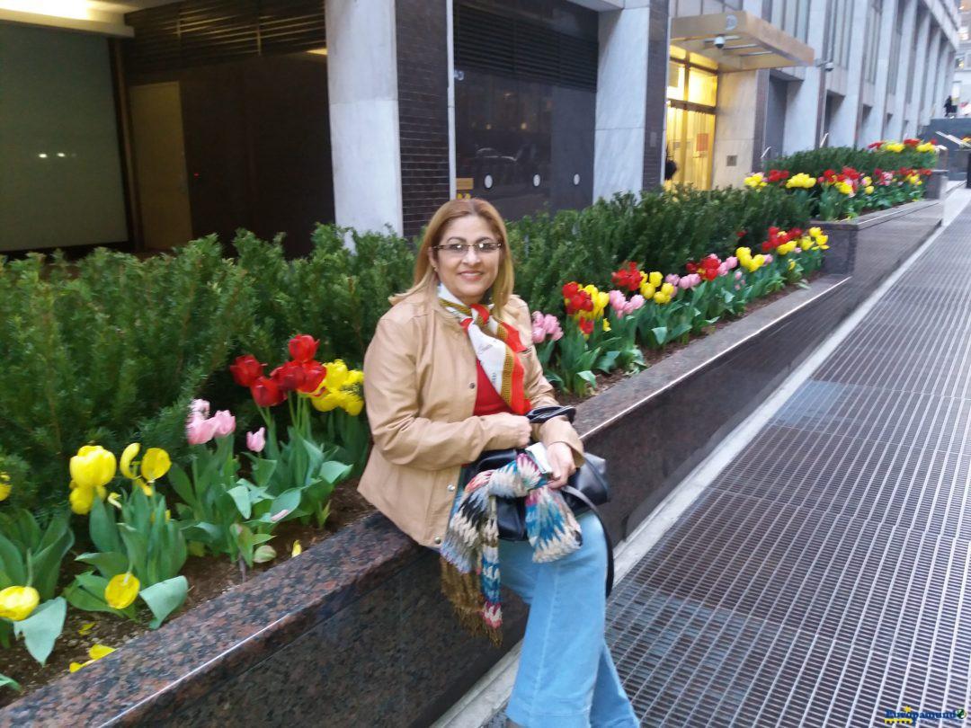 New York – as lindas tulipas que encontrei na primavera de 2016