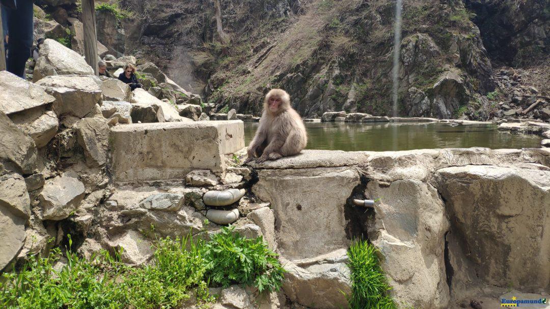 Parque de los monos