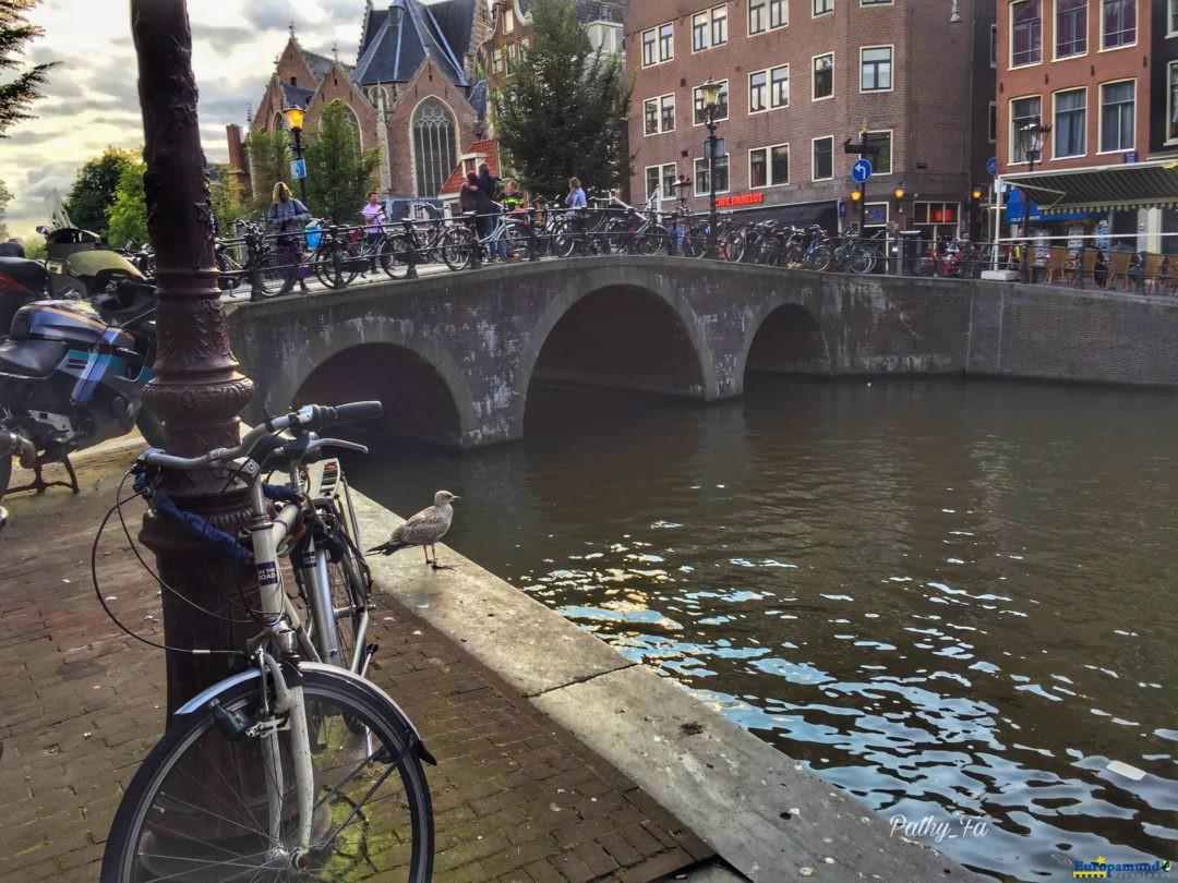 Canales, Puentes y Flores